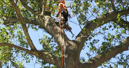 Tim Baker & Sons Tree Service Tree Removal, Pruning & Stump Grinding